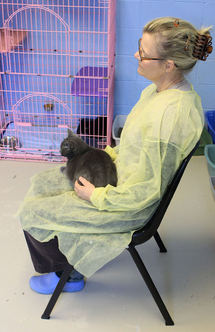 Offering Reiki while on my lap, and to the caged cat next to me, in an adoption room.